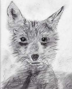 Lobo-zorro Autor: ferro 2014